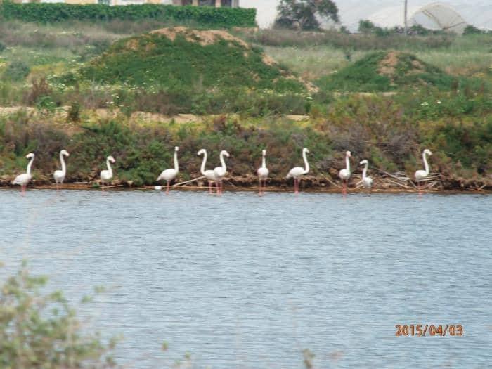 Birdwatching in Tavira